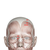 BL03 Bladder Meridian Acupuncture Point - Muscular / Muscle level.