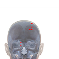 BL03 Bladder Meridian Acupuncture Point - Skeletal / Skeleton level.