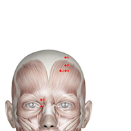 BL05 Bladder Meridian Acupuncture Point - Muscular / Muscle level.