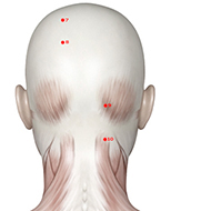 BL09 Bladder Meridian Acupuncture Point - Muscular / Muscle level.