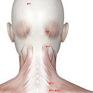 BL10 Bladder Meridian Acupuncture Point - Muscular / Muscle level.