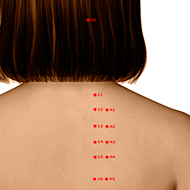 BL11 Bladder Meridian Acupuncture Point - Dermal / Skin level.
