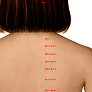 BL12 Bladder Meridian Acupuncture Point - Dermal / Skin level.