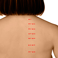 BL13 Bladder Meridian Acupuncture Point - Dermal / Skin level.