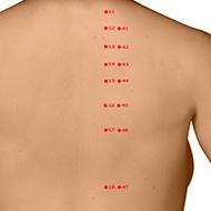 BL16 Bladder Meridian Acupuncture Point - Dermal / Skin level.