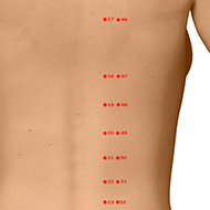 BL19 Bladder Meridian Acupuncture Point - Dermal / Skin level.