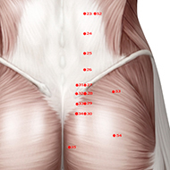 BL27 Bladder Meridian Acupuncture Point - Muscular / Muscle level.