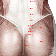 BL32 Bladder Meridian Acupuncture Point - Muscular / Muscle level.