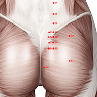BL34 Bladder Meridian Acupuncture Point - Muscular / Muscle level.