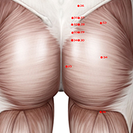 BL35 Bladder Meridian Acupuncture Point - Muscular / Muscle level.