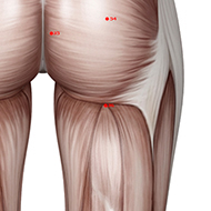 BL36 - Bladder Meridian 36 Acupuncture Point | AcuWiki