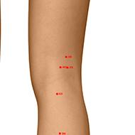 BL39 Bladder Meridian Acupuncture Point - Dermal / Skin level.