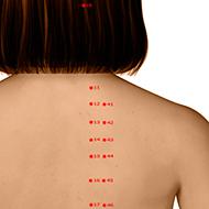 BL41 Bladder Meridian Acupuncture Point - Dermal / Skin level.