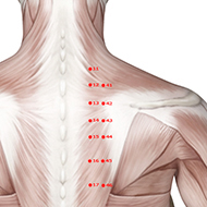 BL42 Bladder Meridian Acupuncture Point - Muscular / Muscle level.