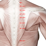 BL45 Bladder Meridian Acupuncture Point - Muscular / Muscle level.