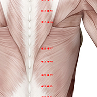 BL47 Bladder Meridian Acupuncture Point - Muscular / Muscle level.
