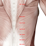 BL48 Bladder Meridian Acupuncture Point - Muscular / Muscle level.
