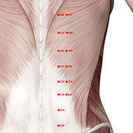 BL50 Bladder Meridian Acupuncture Point - Muscular / Muscle level.