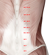 BL51 Bladder Meridian Acupuncture Point - Muscular / Muscle level.