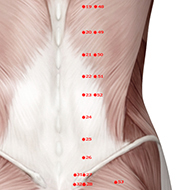 BL52 Bladder Meridian Acupuncture Point - Muscular / Muscle level.