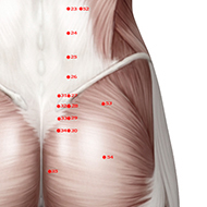 BL53 Bladder Meridian Acupuncture Point - Muscular / Muscle level.