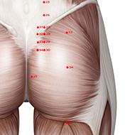BL54 Bladder Meridian Acupuncture Point - Muscular / Muscle level.