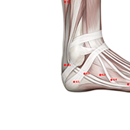 BL60 Bladder Meridian Acupuncture Point - Muscular / Muscle level.
