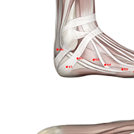 BL61 Bladder Meridian Acupuncture Point - Muscular / Muscle level.