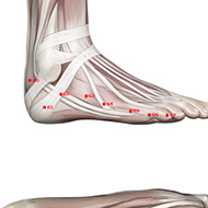 BL64 Bladder Meridian Acupuncture Point - Muscular / Muscle level.