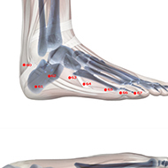 BL64 Bladder Meridian Acupuncture Point - Skeletal / Skeleton level.