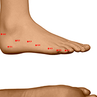 BL65 Bladder Meridian Acupuncture Point - Dermal / Skin level.