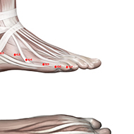 BL67 Bladder Meridian Acupuncture Point - Muscular / Muscle level.