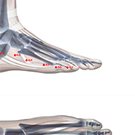 BL67 Bladder Meridian Acupuncture Point - Skeletal / Skeleton level.