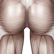 CV01 Conception Vessel Meridian Acupuncture Point - Muscular / Muscle level.