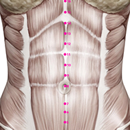 CV10 Conception Vessel Meridian Acupuncture Point - Muscular / Muscle level.