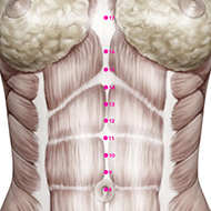 CV13 Conception Vessel Meridian Acupuncture Point - Muscular / Muscle level.