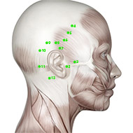 GB02 Gallbladder Meridian Acupuncture Point - Muscular / Muscle level.