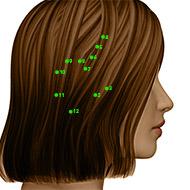 GB02 Gallbladder Meridian Acupuncture Point - Dermal / Skin level.