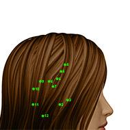 GB04 Gallbladder Meridian Acupuncture Point - Dermal / Skin level.