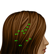 GB05 Gallbladder Meridian Acupuncture Point - Dermal / Skin level.