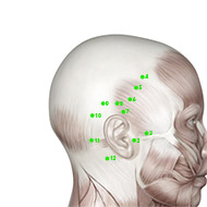 GB09 Gallbladder Meridian Acupuncture Point - Muscular / Muscle level.