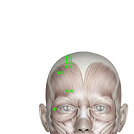 GB15 Gallbladder Meridian Acupuncture Point - Muscular / Muscle level.