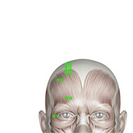 GB17 Gallbladder Meridian Acupuncture Point - Muscular / Muscle level.