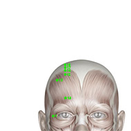 GB18 Gallbladder Meridian Acupuncture Point - Muscular / Muscle level.