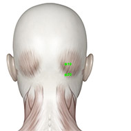 GB19 Gallbladder Meridian Acupuncture Point - Muscular / Muscle level.