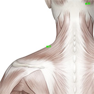 GB21 Gallbladder Meridian Acupuncture Point - Muscular / Muscle level.