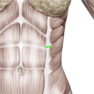 GB24 Gallbladder Meridian Acupuncture Point - Muscular / Muscle level.