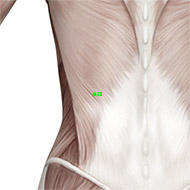 GB25 Gallbladder Meridian Acupuncture Point - Muscular / Muscle level.