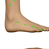 GB41 Gallbladder Meridian Acupuncture Point - Dermal / Skin level.