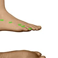 GB44 Gallbladder Meridian Acupuncture Point - Dermal / Skin level.